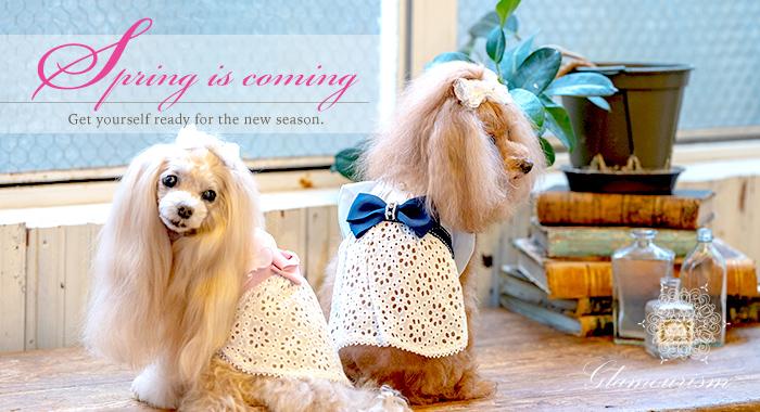 犬服ブランド「グラマーイズム(Glamourism)2020春夏コレクション