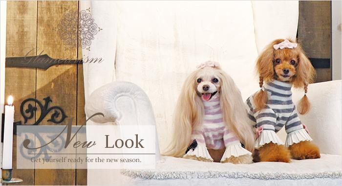 犬服ブランド「グラマーイズム(Glamourism)秋冬商品♪